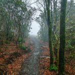 Top of the Wildcat Rock Trail
