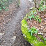 Ledge of Moss on the Wildcat Rock Trail