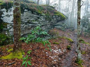 Rock Outcrops on the Wildcat Rock Trail