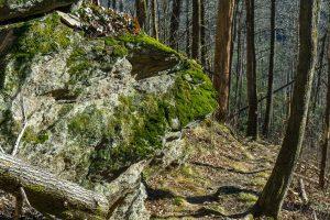 Rock Outcrop on the Devils Den Trail