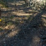 River Loop and Devils Den Trails