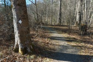 Gravel Section of River Loop Trail