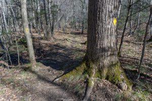 River Loop Trail in Big Trees