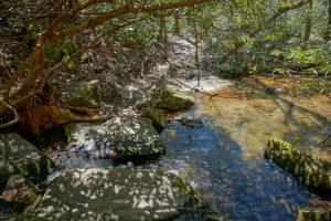 East Fork Overflow Creek Tributary