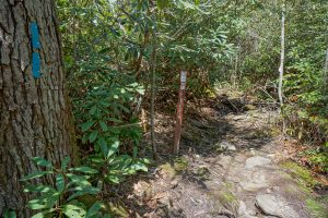 Chinquapin Mountain Trail Junction