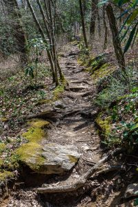 Mossy Sides of the Chinquapin Mountain Trail