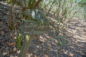 Old Sign on the Chinquapin Mountain Trail