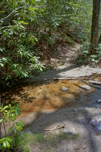 Tributary Stream on the Chinquapin Mountain Trail