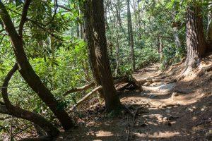 Forest along the Glen Falls Trail