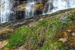 Upper Drop of Glen Falls in Early Spring