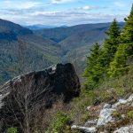 Carolina Hemlock in Linville Gorge