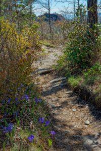 Iris Beside the Mountains to Sea Trail