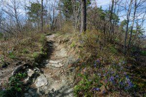 Iris Beside Mountains to Sea Trail