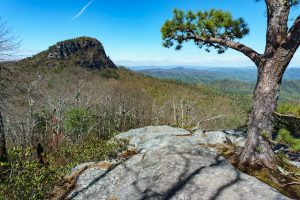 View of Table Rock from the Mountains to Sea Trail in the Chimneys Area