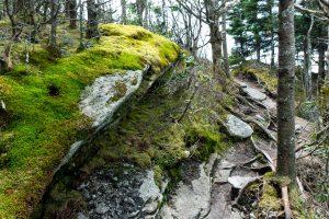 Mossy Rock near Calloway Peak