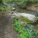 Profile Trail Beside the Watauga River