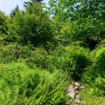 Big Tom Trail Climbing thru Fern Fields