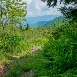 Ferns and View on the Big Tom Trail