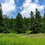 Campsite in the Spruce