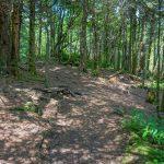 Big Tom/Deep Gap/Black Mountain Crest Trail Junction