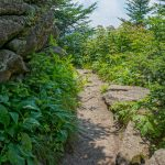 Deep Gap Trail on Mount Craig
