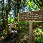 Sensitive Habitat on Mount Craig