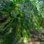 Mossy Rock Outcropping on the Mount Mitchell Trail