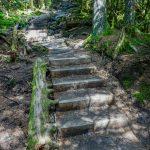 Mount Mitchell Trail Steps