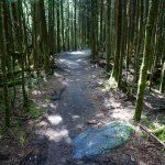 Mount Mitchell Trail on Commissary Ridge